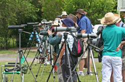 Graphic of birders using scopes
